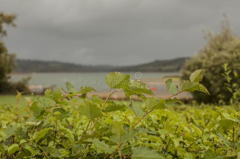 Carsington Water, Derbyshire, England - bright green leaves and dark blue skies. This image shows a view of Carsington Water. Carsington Water is a reservoir royalty free stock photography