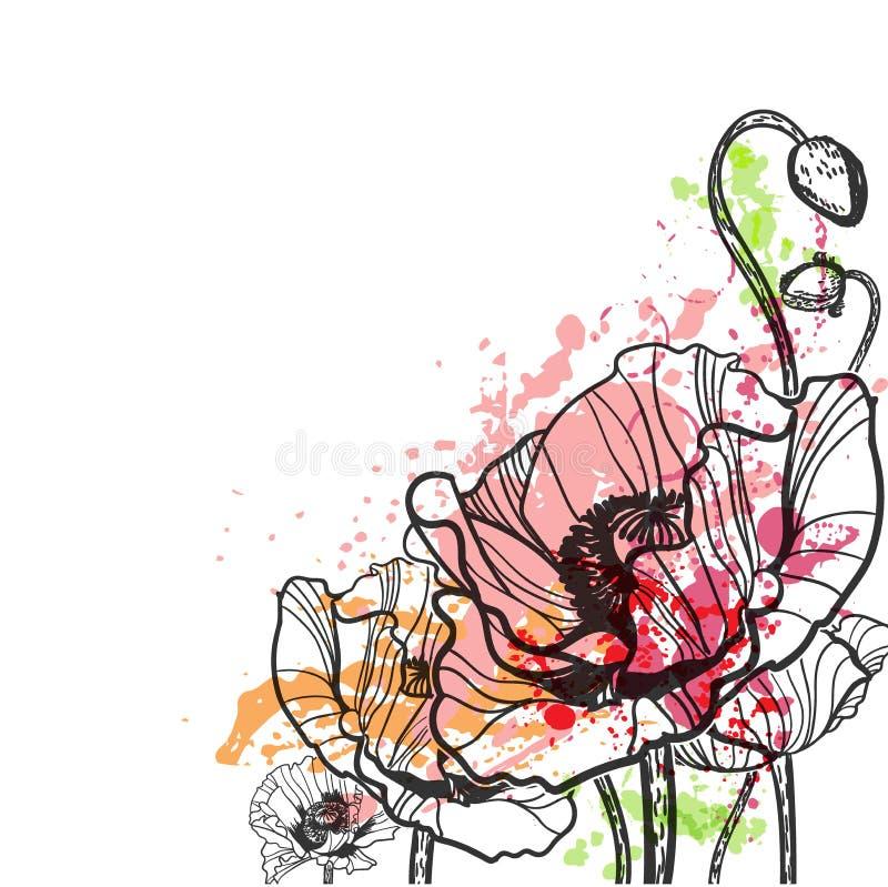 Cartão colorido do fundo do verão da flor do respingo do vetor da papoila ilustração royalty free