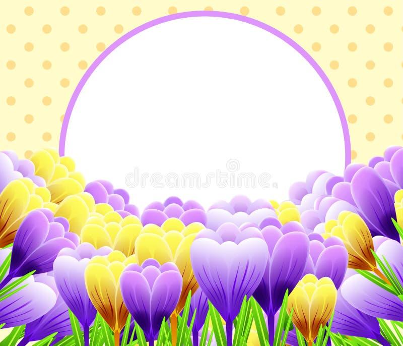 Cartão com açafrões Flor da mola Aperfeiçoe para o projeto do casamento, do cumprimento ou do convite ilustração stock