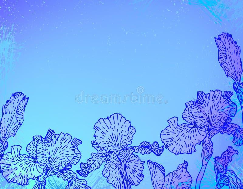 Cartão com as flores da íris no watercolour azul ilustração royalty free