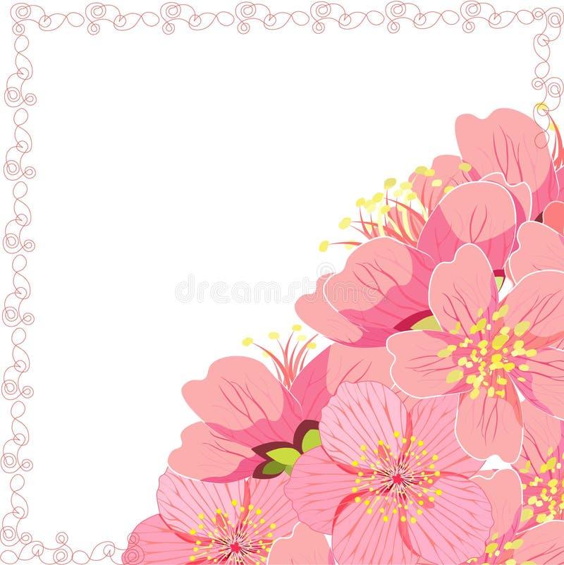 Cartão com canto da flor de cerejeira de sakura Ilustração do vetor ilustração royalty free