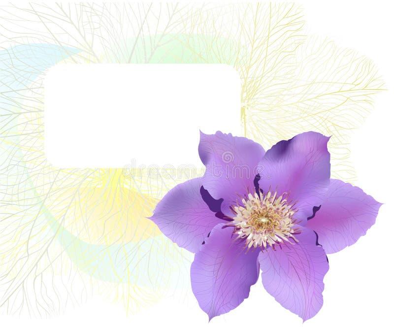 Cartão com flor do clematis ilustração do vetor