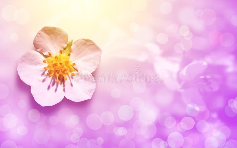 Cartão com a flor no fundo cor-de-rosa fotos de stock royalty free