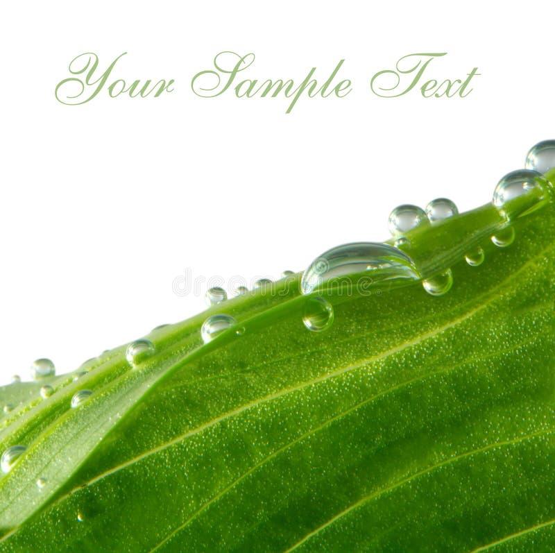 Cartão com folha verde imagens de stock royalty free