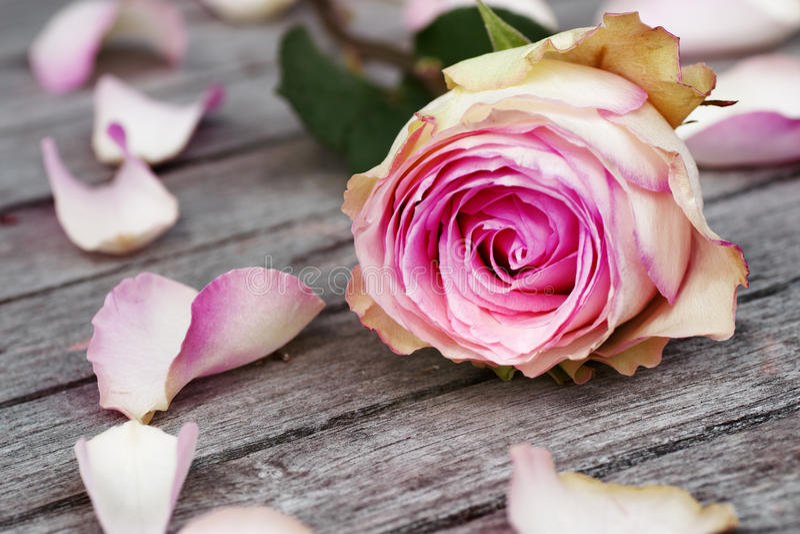 Cartão com rosas fotos de stock