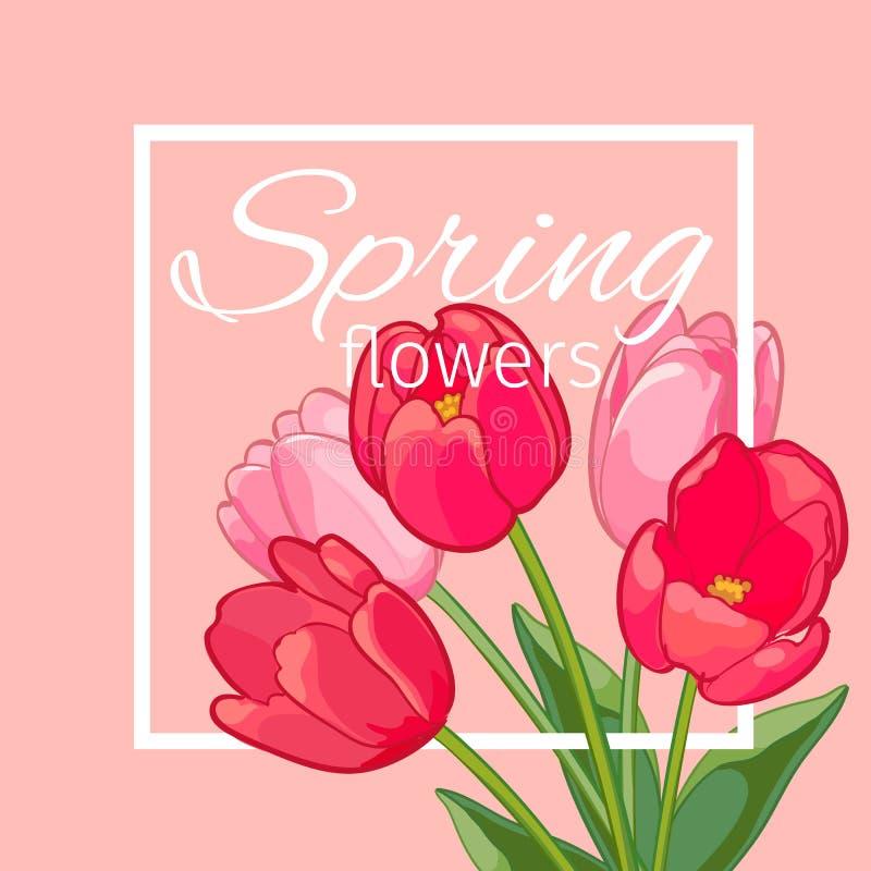 Cartão com Tulip Flowers de florescência Ilustração do vetor ilustração royalty free