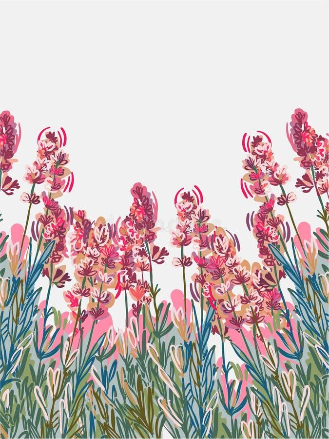 Cartão cor-de-rosa da flor do fundo do vecor da alfazema colorido ilustração royalty free