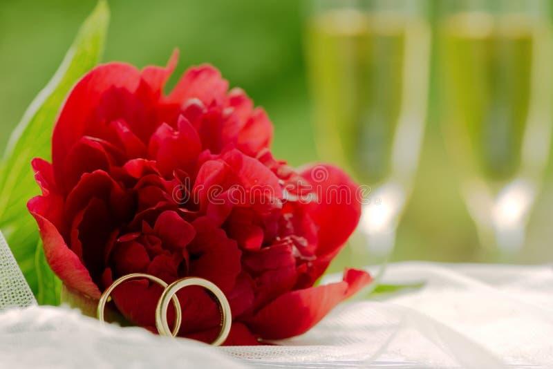 Cartão de casamento com uma peônia vermelha e alianças de casamento fotografia de stock