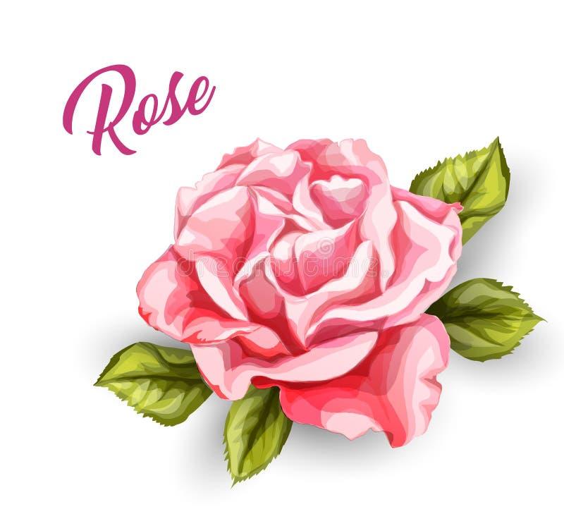 Cartão de casamento cor-de-rosa da flor da aquarela do vetor ilustração do vetor