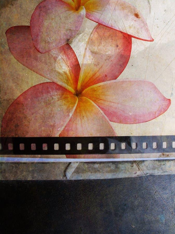 Cartão de Grunge com flor ilustração stock