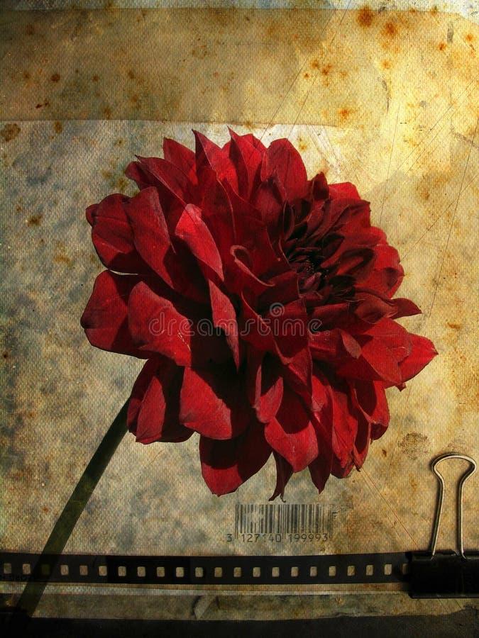Cartão de Grunge com flor no.1 ilustração do vetor