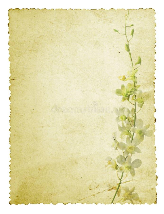 Cartão de Grunge da orquídea fotografia de stock royalty free