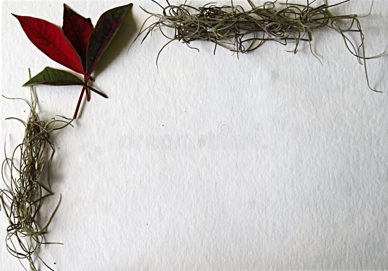 Cartão de Natal com canto de flores naturais foto de stock