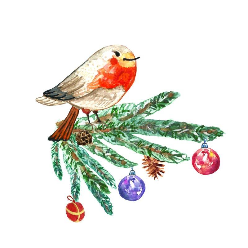 Cartão de Natal com mão bonito o pássaro tirado do pisco de peito vermelho no ramo de árvore do abeto Ilustração da aquarela no f ilustração do vetor