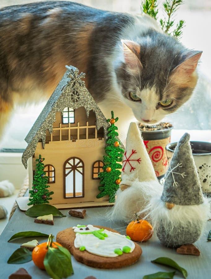 Cartão de Natal com uma casa elegante e anãs engraçadas Furry cat com interesse examina a composição fotos de stock royalty free