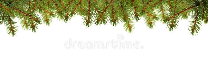 Cartão de Natal com verde do pinho imagens de stock