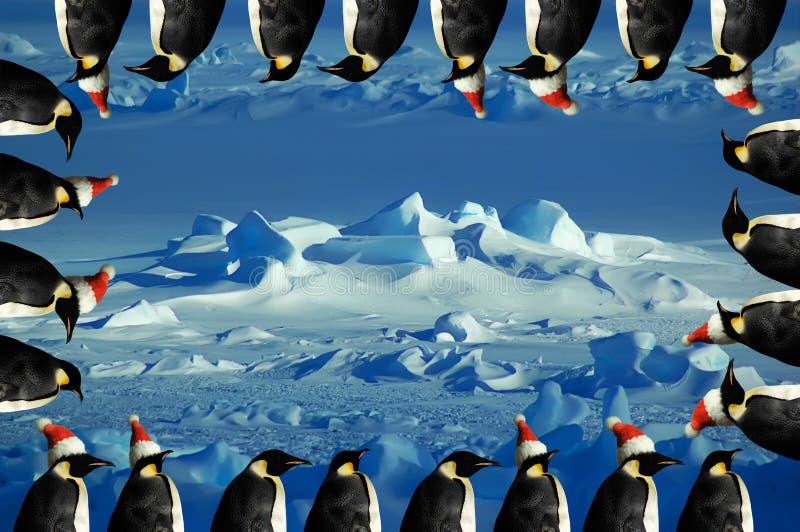 Cartão de Natal do pinguim imagens de stock