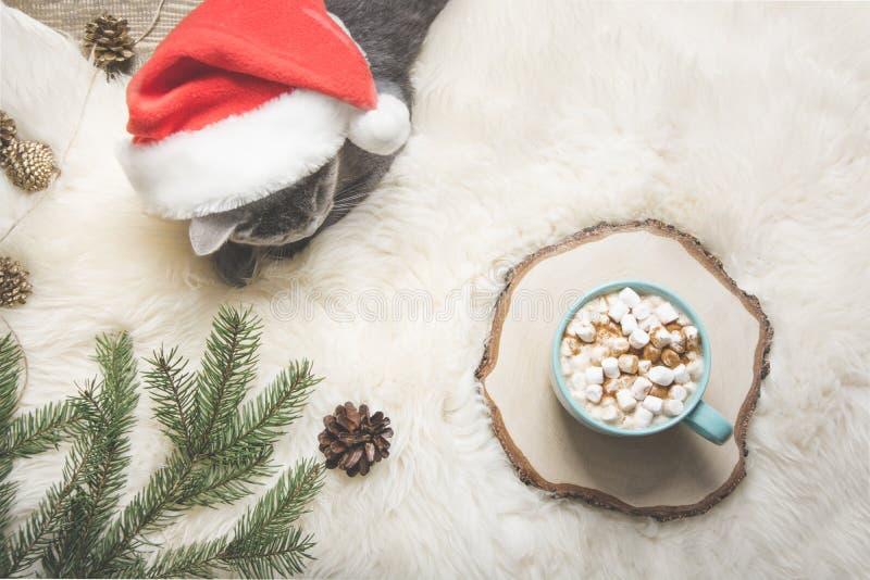 Cartão de Natal Xícara de café, gato britânico Descanso em casa Vista superior Copie o espaço Imagem matte imagens de stock