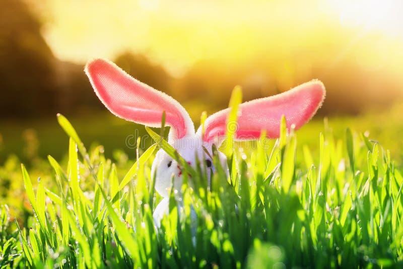 Cartão de Páscoa com as orelhas do coelho engraçado e a vara cor-de-rosa fora do prado brilhante ensolarado verde da grama na  foto de stock royalty free