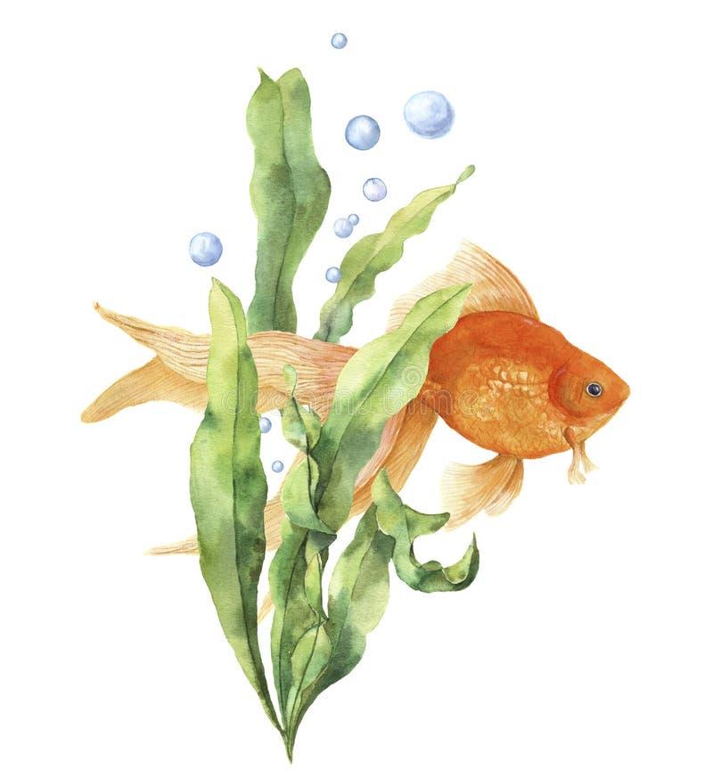 Cartão do aquário da aquarela Cópia subaquática pintado à mão com o peixe dourado, o ramo da alga e as bolhas de ar isolados no b ilustração do vetor