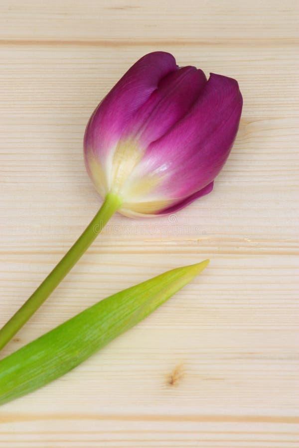 Cartão do dia dos Valentim ou de matrizes - foto conservada em estoque fotos de stock royalty free