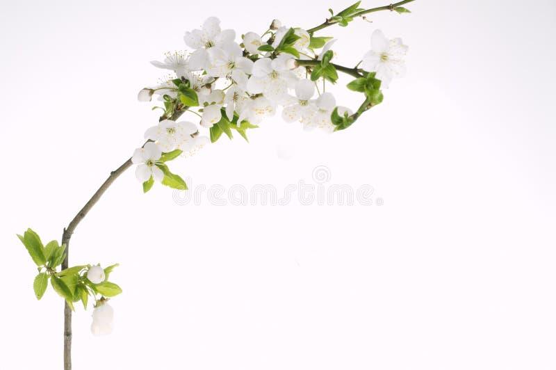 Cartão do feriado do cumprimento com flores de florescência imagens de stock royalty free