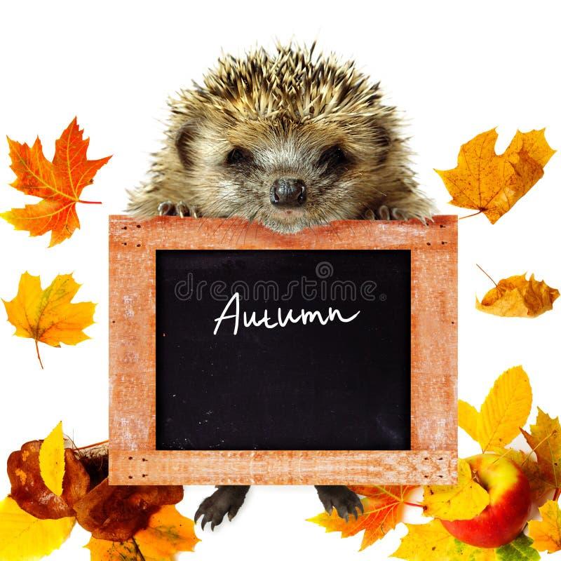 Cartão do outono imagens de stock