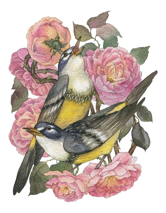 Cartão do vintage com rosas e as aves canoras dois bonitas Pode ser usado como o cartão do convite para o casamento, nascimento,  fotos de stock royalty free