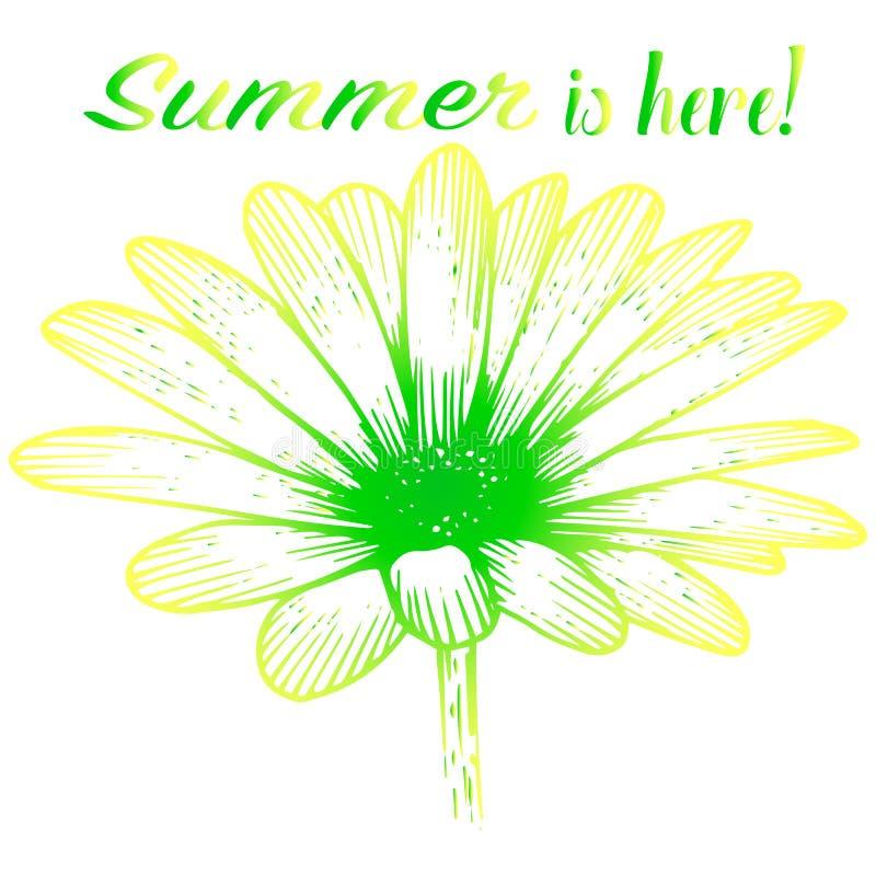 Cartão ensolarado brilhante - camomila ilustração stock