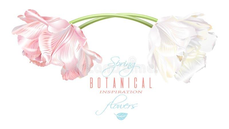Cartão horizontal da tulipa ilustração stock