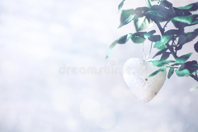 Cartão moderno mínimo do dia de Valentim, bandeira, modelo com espaço da cópia Rosas corais com folhas verdes, coração branco cor fotos de stock royalty free