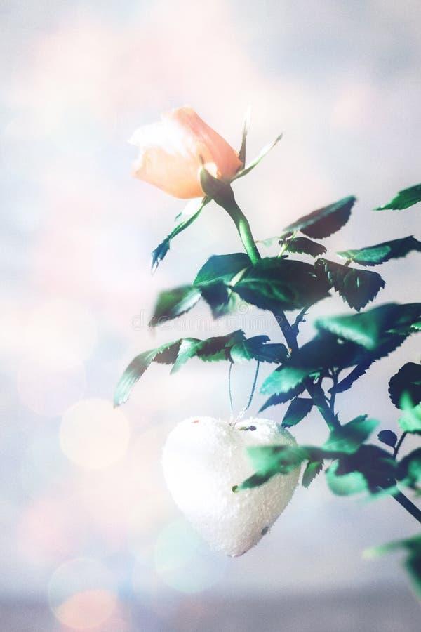 Cartão moderno mínimo do dia de Valentim, bandeira, modelo com espaço da cópia Rosas corais com folhas verdes, coração branco cor imagens de stock royalty free