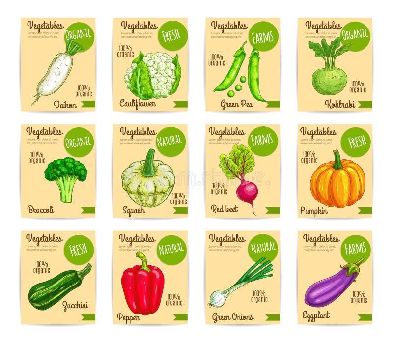 Cartão orgânico do legume fresco, etiqueta, grupo do preço ilustração do vetor