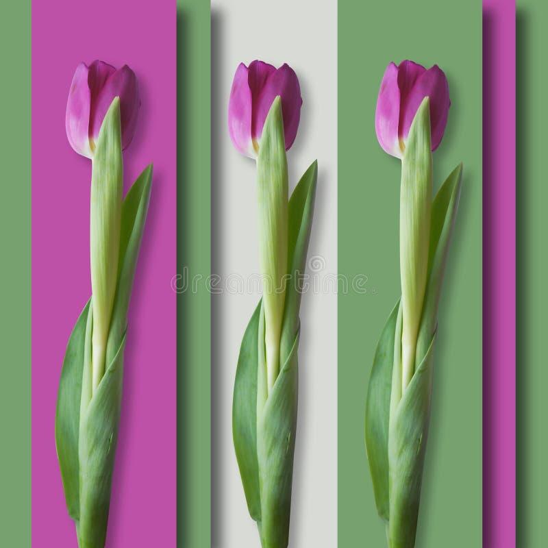 Cartão retro com tulips ilustração royalty free