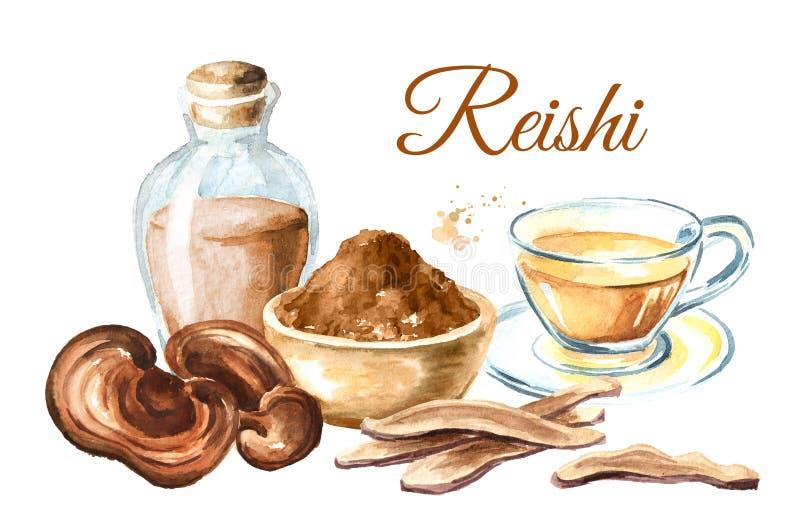 Cartão secado orgânico do cogumelo do lucidum do ganoderma de Reishi Ilustração tirada mão da aquarela, isolada no fundo branco ilustração do vetor
