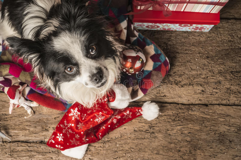 Cartões de Natal dos cães fotografia de stock royalty free
