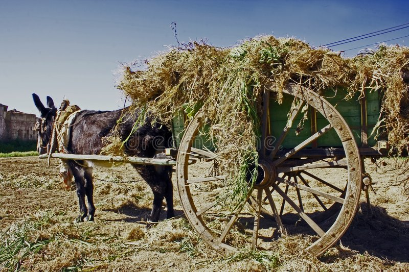 Cart full of grass. Pulled by a donkey on a farm in Portugal royalty free stock photo