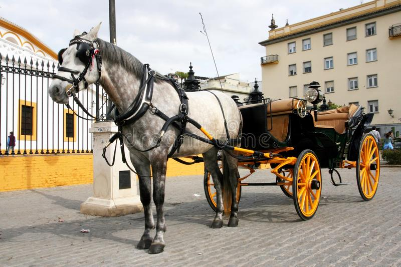 Cart and horse, Spain. Cart and white horse on a square in Seville, Spain stock photo