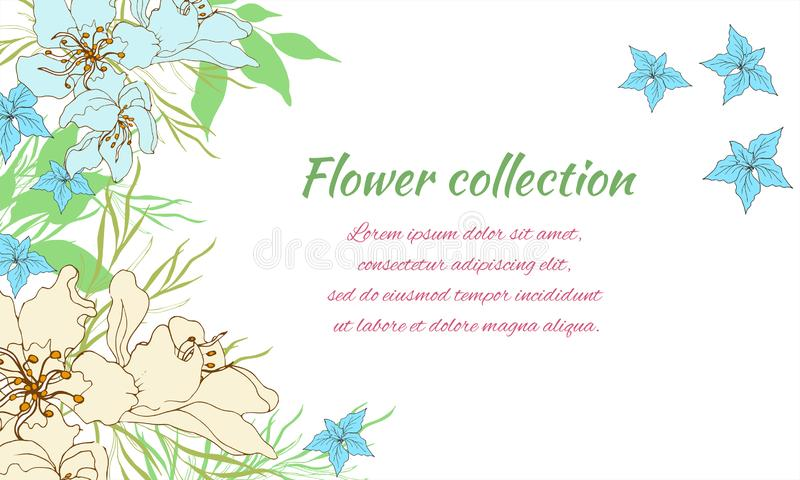 Cart?o da flor Flores delicadas do verão em um fundo branco Quadro de texto para felicita??es ilustração do vetor