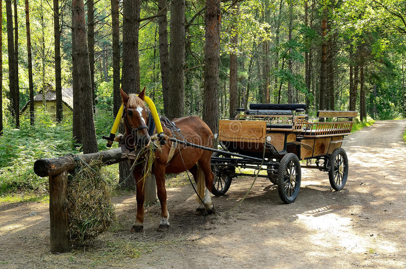 The cart pulled by a horse. On a forest road royalty free stock image