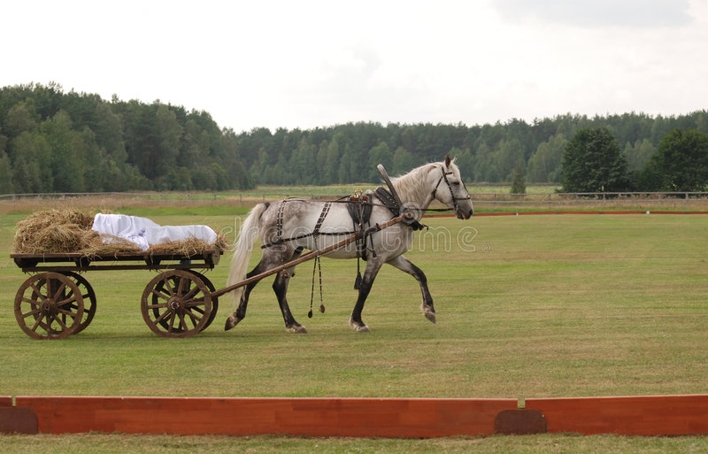 Cart with a white horse. Cart with a white spotty horse on the field stock photography
