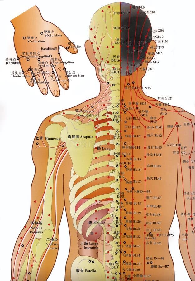 Carta da acupunctura - medicina alternativa   ilustração stock