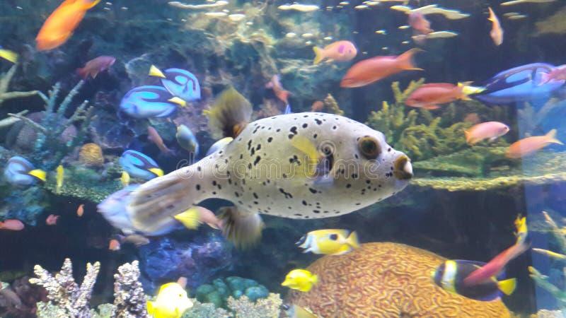Carta da parati dei pesci immagine stock