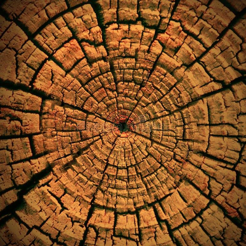 Carta da parati di legno del fondo del dettaglio di struttura immagini stock libere da diritti