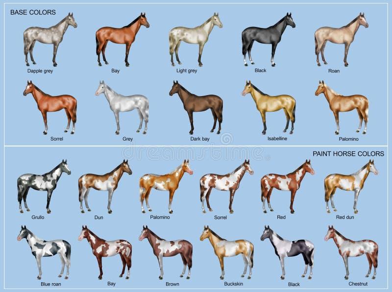 Carta de color del caballo stock de ilustración