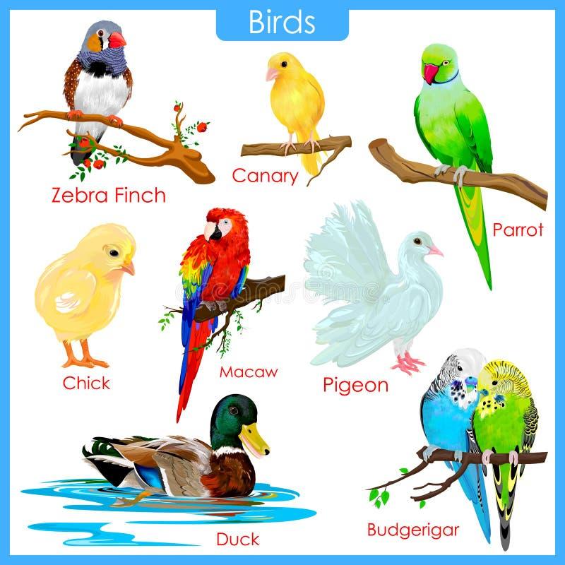 Carta de pássaros coloridos ilustração royalty free
