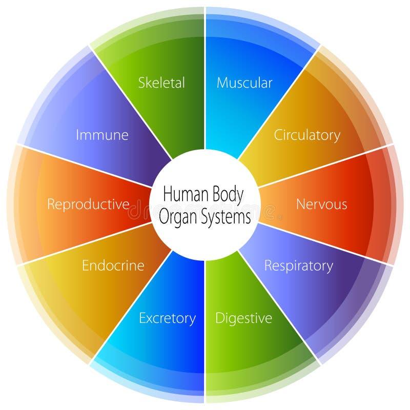Carta de sistemas del órgano del cuerpo humano stock de ilustración