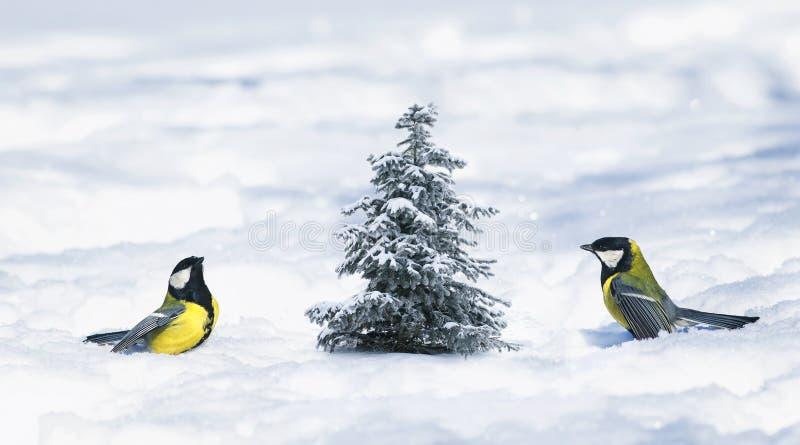 Carta del nuovo anno con le passeggiate dei capezzoli degli uccelli su neve bianca accanto ad uno smal fotografia stock