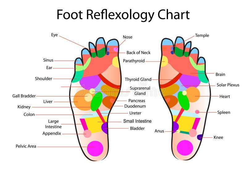 Carta del reflexology del pie ilustración del vector