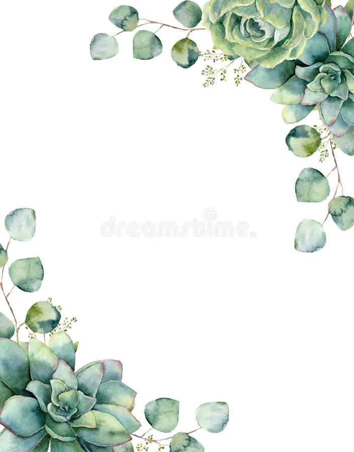 Carta dell'acquerello con il mazzo esotico Ramo dell'eucalyptus e foglie dipinti a mano, succulenti verdi isolati su bianco illustrazione vettoriale